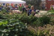Volunteers sampling edible perennials at the Chapter Arts Centre Community Garden. Designer - © Michele Fitzsimmons