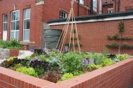 Salads & edible flowers with espalier in the Chapter Arts Centre Community Garden. Designer - Michele Fitzsimmons. Installed by Canton Community Gardens. ©Michele Fitzsimmons