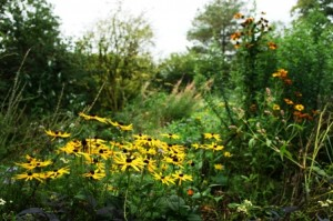 Denmark Farm Community Wildlife Garden. © Michele Fitzsimmons