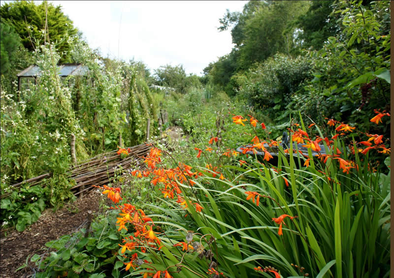 A naturalistic garden which combines the ornamental with food production and wildlife habitats.