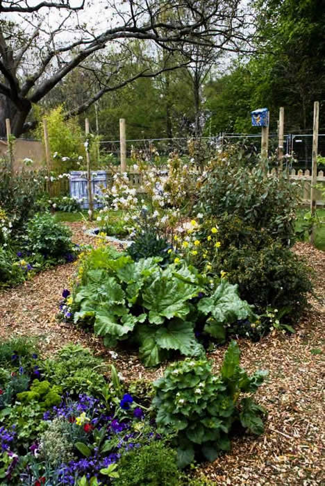 An ornamental edible garden.